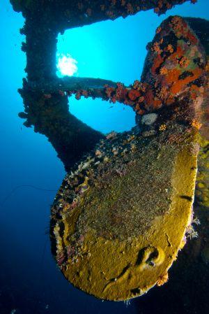 Bonaire-Hilma-Hooker-02.jpg