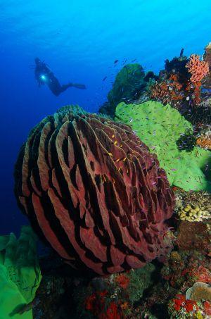 Papua-Neuguinea-01.jpg