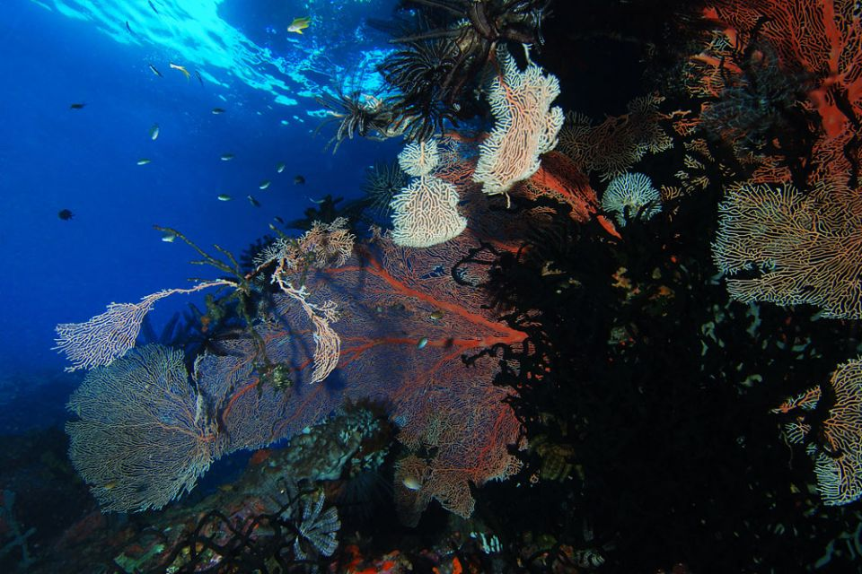 Papua-Neuguinea-04.jpg