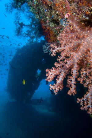 Bali-Tulamben-008.jpg