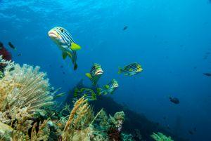 Bali-Tulamben-014.jpg